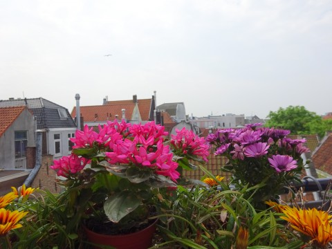 1e Binnenvestgracht, Leiden