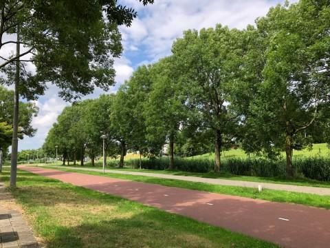 Bernard Shawsingel, Amsterdam